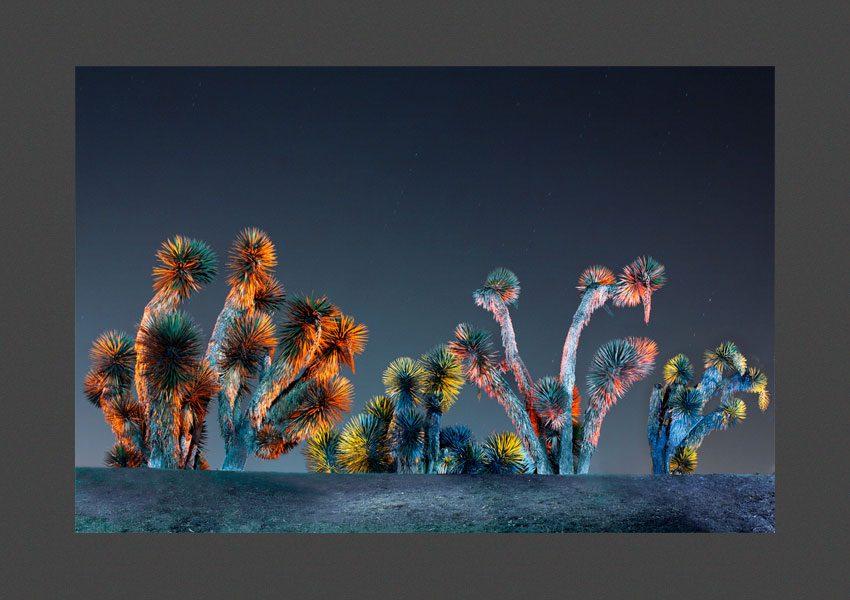 Yuccas, Pachuca, Mexique, 2012
