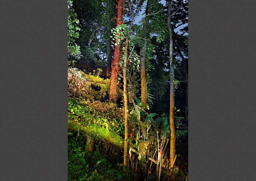 Forêt primaire, La Martinique, 2011