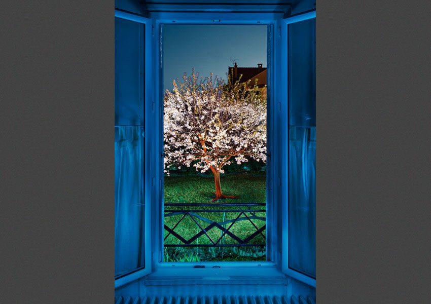 Vu de ma fenêtre, le Printemps, 2010