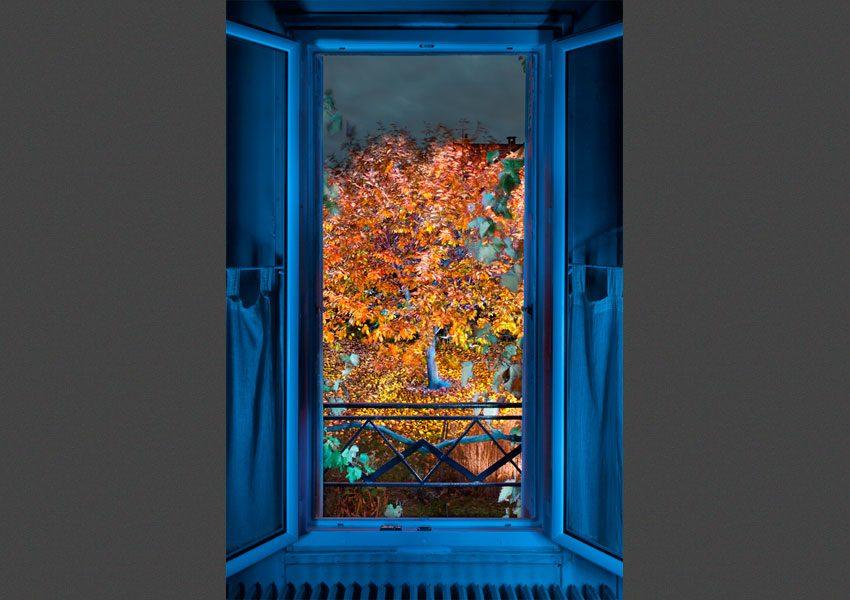 Vu de ma fenêtre, l'Automne, 2010