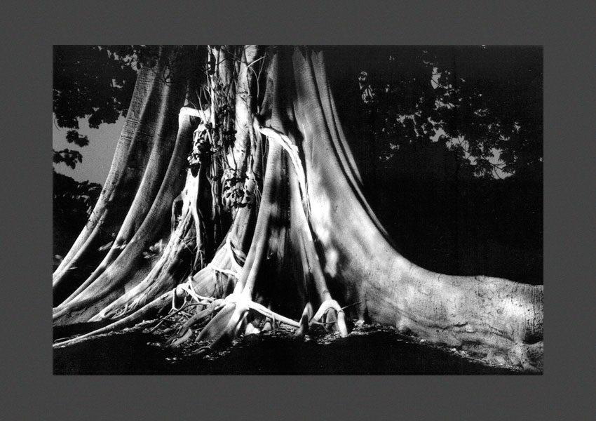 arbres sacrés du Sénégal,1986
